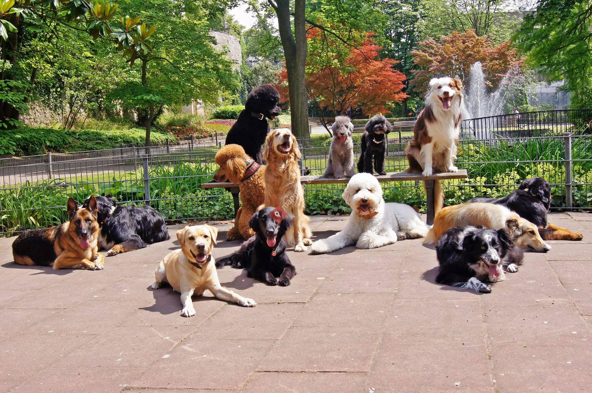 1x1 Hundetraining - Die Hundeschule, die zu Ihnen kommt!