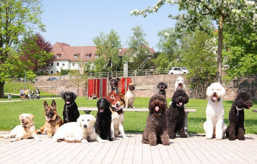 1x1 Hundetraining - Regionale Hundeschule Rheintal - Liechtenstein - Buchs - Sargans - Walenstadt - Chur