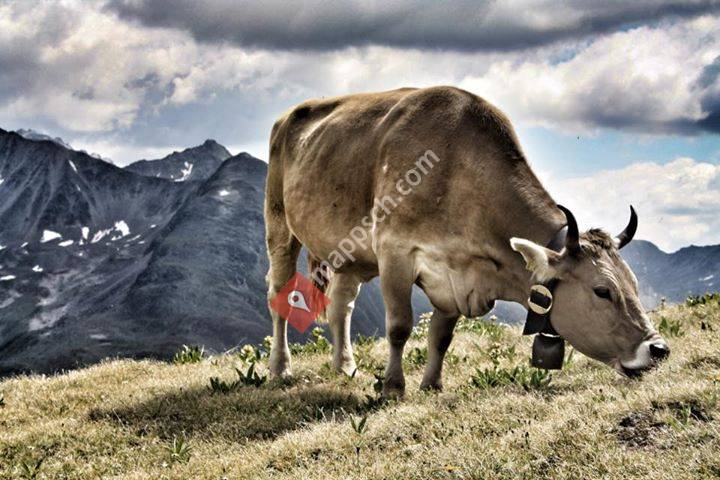 Bio Alpen Hof Valorgia