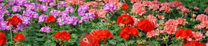 Blumen Joos Gärtnerei