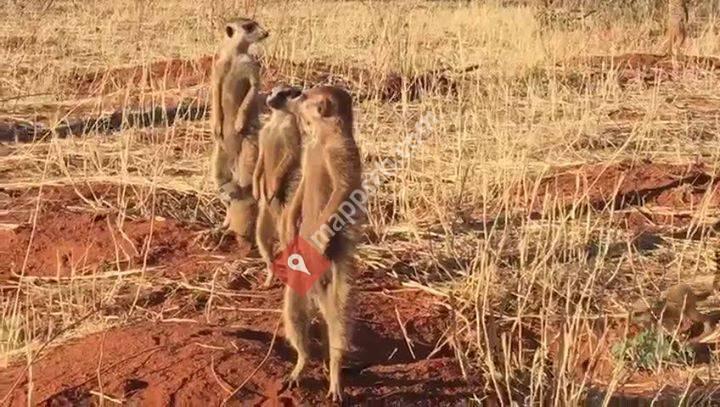 Private Safaris
