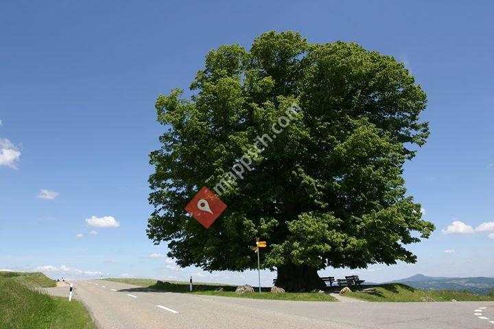 SANA Baumpflege